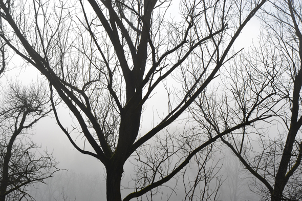 ilmolino_nebbia2